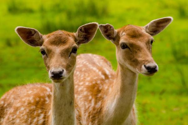 Parc animalier des Dronières